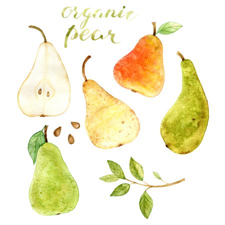 白い背景の水彩画果物梨絵。エコ、新鮮な有機食品。水彩の手描き。 写真素材 - 79783726