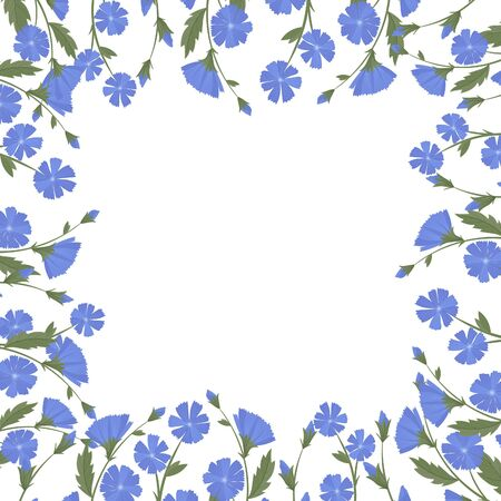 Chicory, wild flowers and medicinal herbs. Design for herbal tea, natural cosmetics, perfume, health care products, homeopathy, aromatherapy.