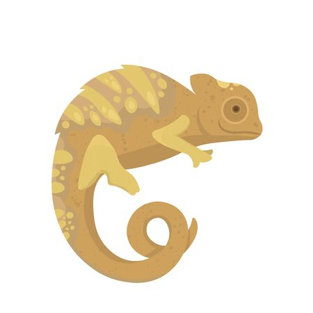 Yellow lizard chameleon isolated on white background. Sienna, pastel, gold colours.