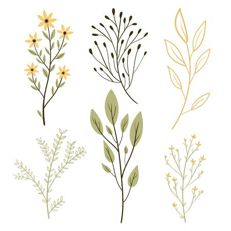 Vector set botanic elements. Wildflowers, herbs, leaf, branches. illustration isolated on white background. Hand draw.