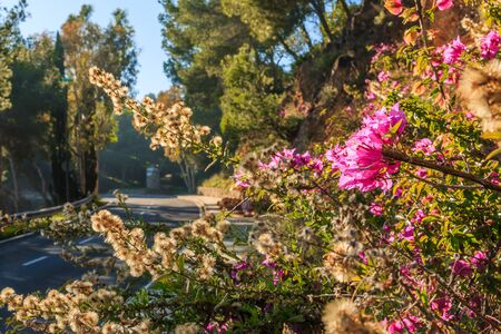 Street in Spain on a sunny day. Purple flowers by the roadside with dry flowers from a bush in the background. Asphalt color track in bokeh in the background