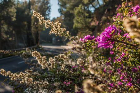 Street train in Spain on a sunny day. Purple flowers by the roadside with dry flowers from a bush in the background. Asphalt color track in the bokeh in the background 版權商用圖片
