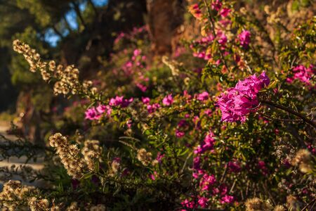 Street in the Spanish city of Malaga on a sunny day. Blooming roadside flowers with dry flowers from a bush in the background. Asphalt color track in bokeh in the background