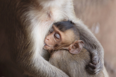 Mother monkey feeding her baby photo