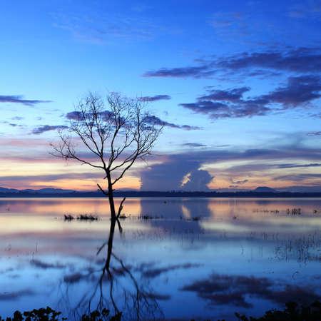 arboles secos: Salida del sol sobre la presa con �rboles muertos en Tailandia