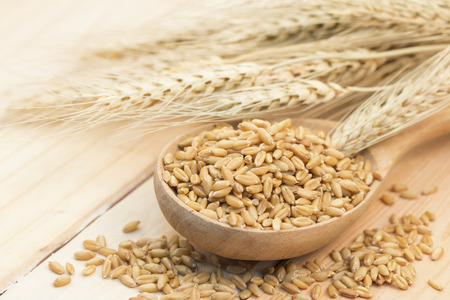 diet product: Pearl barley in wooden spoon