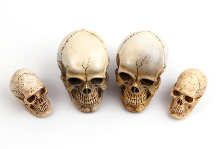 cranium: Human skulls (cranium) on white background Stock Photo