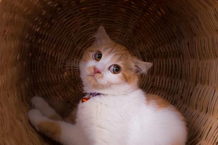 Leuk oranje katje in een mand Stockfoto