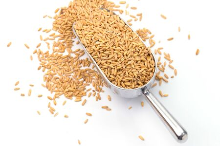 pearls barley grain seed on white background