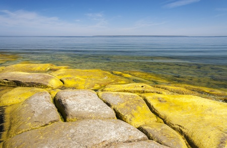 A seashore full of large limestone rocks which are partly covered with yellow algae