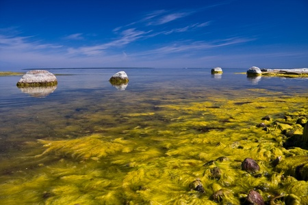 A seashore full of large limestone rocks which are partly covered with yellow algae Stock Photo - 15212641