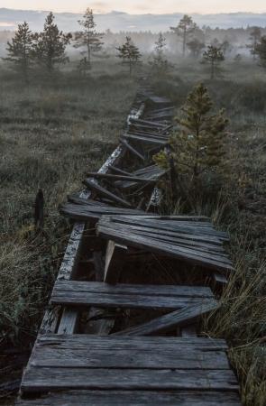 Broken footway in a marsh in dark night in Estonia Stock Photo