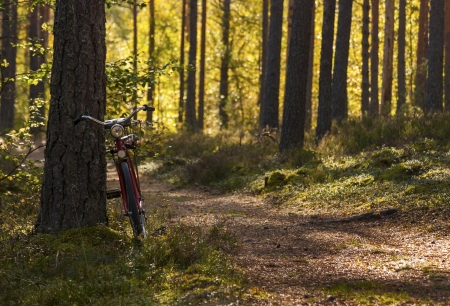 footway: Bicycle left in forest leaning on a pinetree near footway  Dark tree-trunks in front of shrubs in golden sunlight
