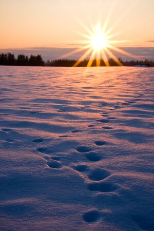 footprint: Deep foot prints in thick snow on a field at golden sunset