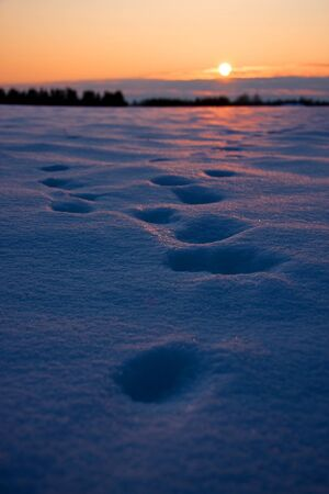 Foot prints in thick snow at sunset Stock Photo - 15773738