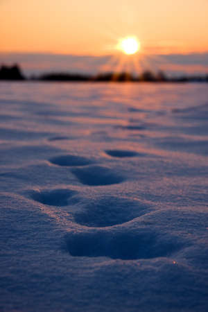 Deep foot prints in thick snow on a field at golden sunset Stock Photo - 15773742