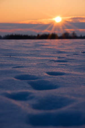Deep foot prints in thick snow on a field at golden sunset Stock Photo - 15773734