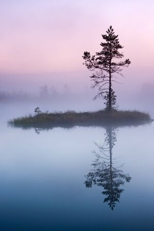 Single tree growing on a small island in bog lake at misty morning  Stock Photo