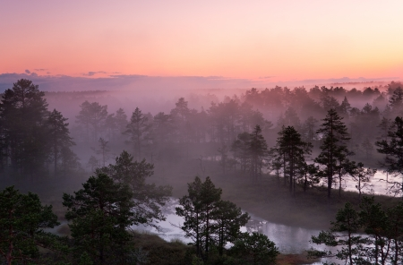 Misty marsh landscape with pine trees and small lakes photo