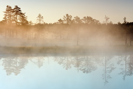 Morning mist in a marsh  Lake with forest reflection in foreground, trees in background