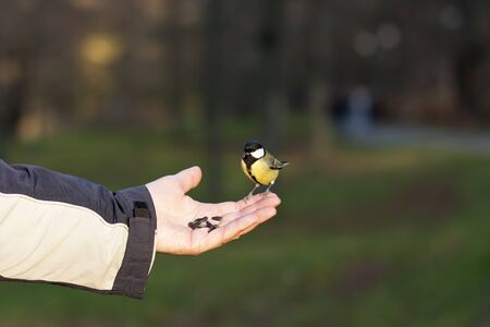 tomtit: Little tomtit standing on a human