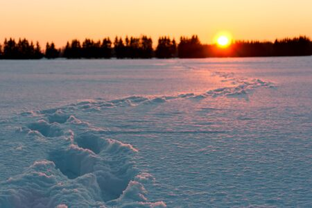 Golden sunset behind snow field with foot prints or tracks Stock Photo - 19084781