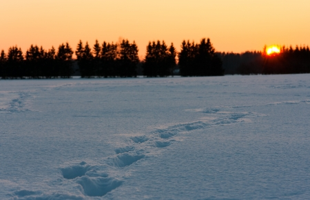 Golden sunset behind snow field with foot prints or tracks