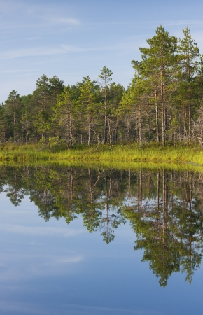 Tree reflections on water and forest Stock Photo