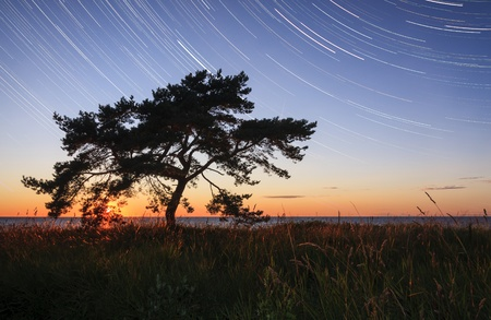 Single pine tree at sunset or sunrise and star trails in the sky Stock Photo