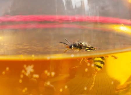 Drown bee or wasp in a wine Stock Photo