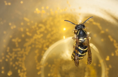 drown: Drown bee or wasp in a wine Stock Photo