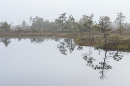 Misty marsh landscape with ponds and pine trees Stock Photo
