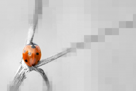 Gray background with squares and red seven spot ladybird