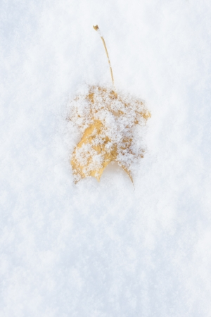 Yellow leaf on snow at late autumn or early winter Stock Photo