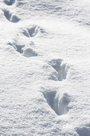 animal tracks: Tracce di animali nella neve profondit� in inverno