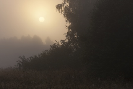 Sun rising above misty forest early in the morning