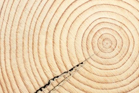 crosscut: Circles of a timber beam when cross cut