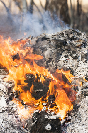 Fire flames around burning tree log photo