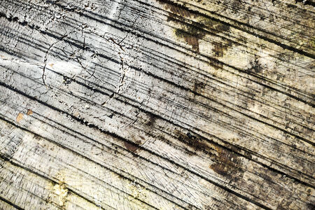 cross section of tree: Abstract timber log cross section background with watercolor effect Stock Photo