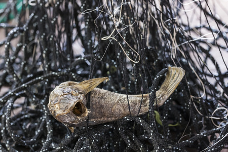 dried up: Closeup of a dried up fish in a fishing net Stock Photo