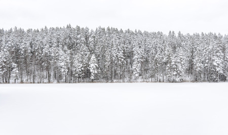 Snowy forest at background, frozen lake at foreground in winter