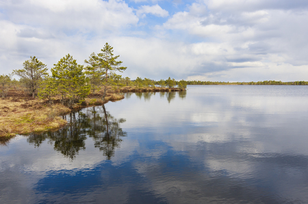 Landscape of a lake reflecting cloudy sky, trees grown at water edge in a marsh