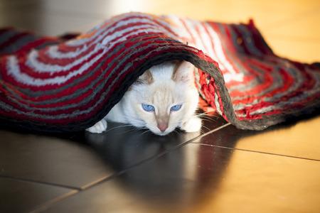 White cat on the floor under carpet Stock Photo