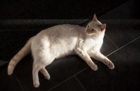 Cute white cat lies in sunshine on dark floor