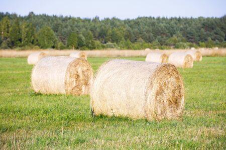 Multiple large hay rolls on large grass field at bright sunny summer day in Hiiumaa, Estonia Stok Fotoğraf