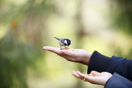 Closeup of little yellow sparrow stand on human hand Stock fotó