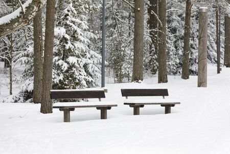 Snowy bench in a forest at winter