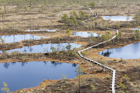 People walk on narrow timber made footpath in a bog in Rapla county in Estonia Stok Fotoğraf