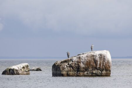 Heron bird stand on a large rock in sea covered wtih birds stool