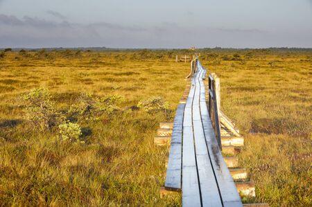 Long wooden boardwalk in a moor in Estonia Stock fotó